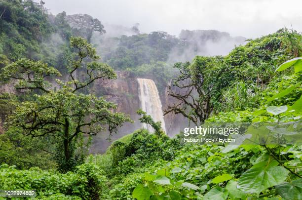 scenic view of rainforest and mountains against sky at ekom waterfall, cameroon, africa - cameroun photos et images de collection
