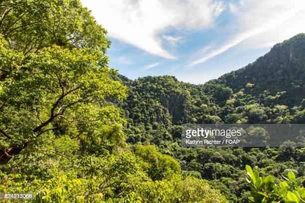 scenic view of rainforest - sint eustatius stockfoto's en -beelden