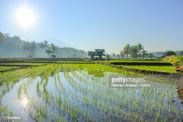 scenic view of rice field against sky - rahmad himawan fotografías e imágenes de stock