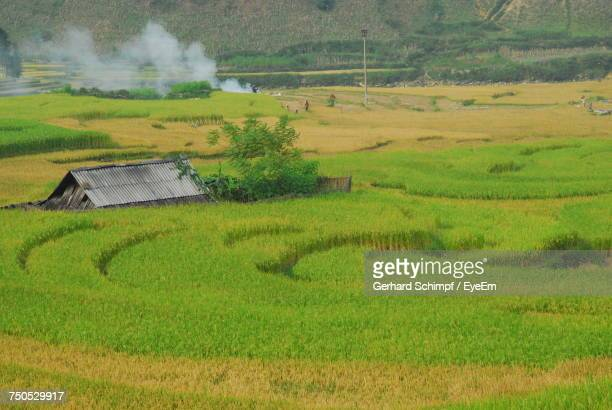 scenic view of rice field against sky - gerhard schimpf stock pictures, royalty-free photos & images