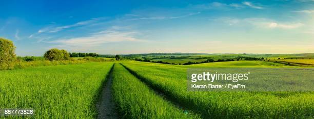 scenic view of rice field against sky - lush stock pictures, royalty-free photos & images