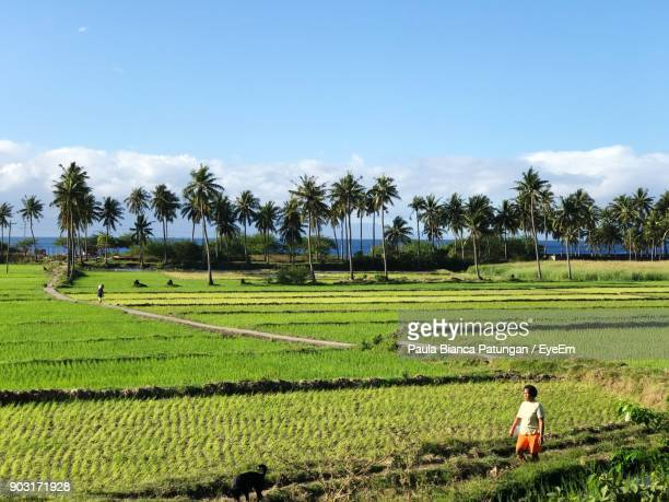 scenic view of rice field against sky - filipino farmer stock photos and pictures