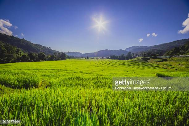 scenic view of rice field against sky - reisterrasse stock-fotos und bilder