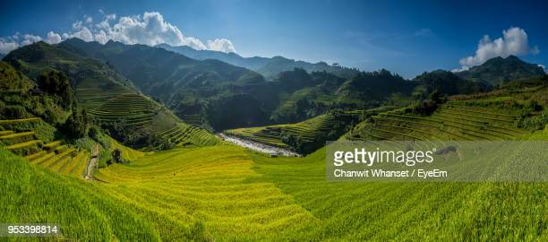 scenic view of rice field against sky - rice terrace stockfoto's en -beelden