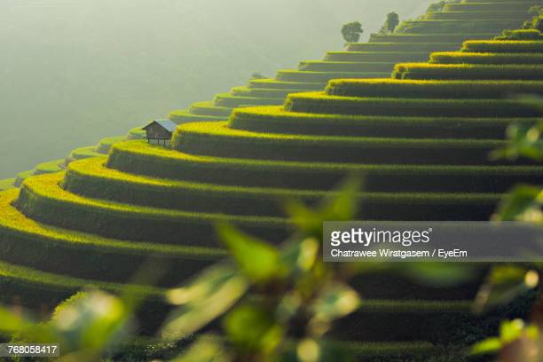scenic view of rice field - wiratgasem stock photos and pictures