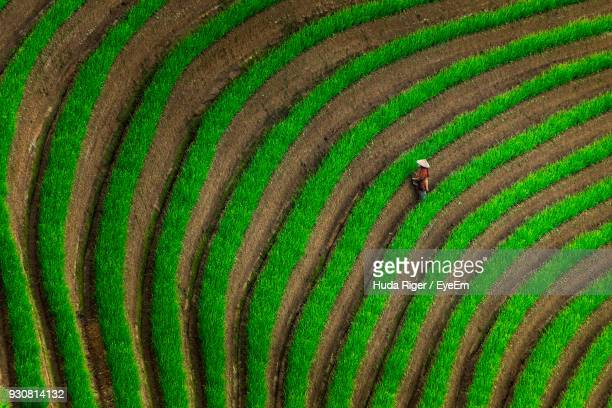 scenic view of rice field - paddy field stock pictures, royalty-free photos & images