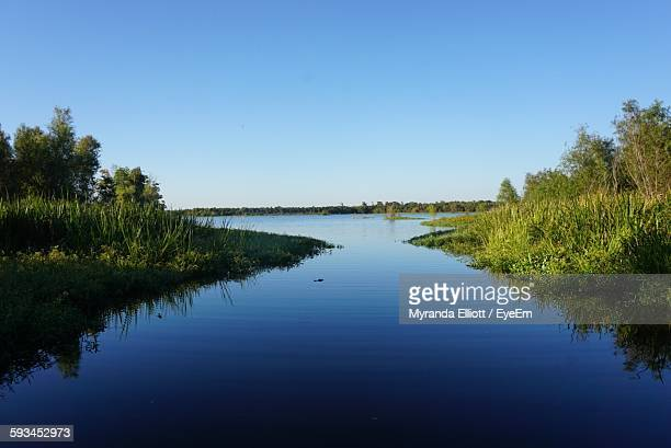 scenic view of river against clear blue sky - louisiana stock photos and pictures