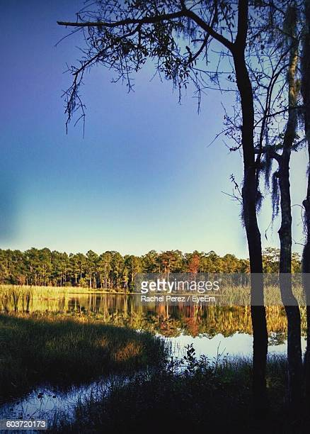 scenic view of river against sky - plant city stock pictures, royalty-free photos & images