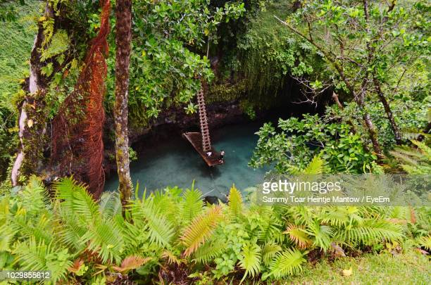 scenic view of river amidst forest - samoa stock pictures, royalty-free photos & images