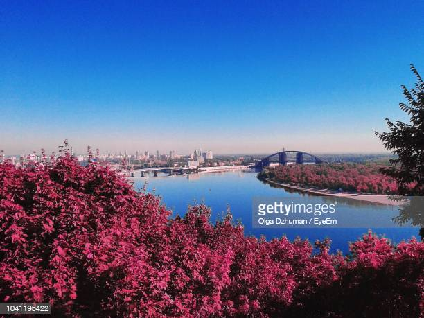 Scenic View Of River Amidst Trees Against Clear Blue Sky