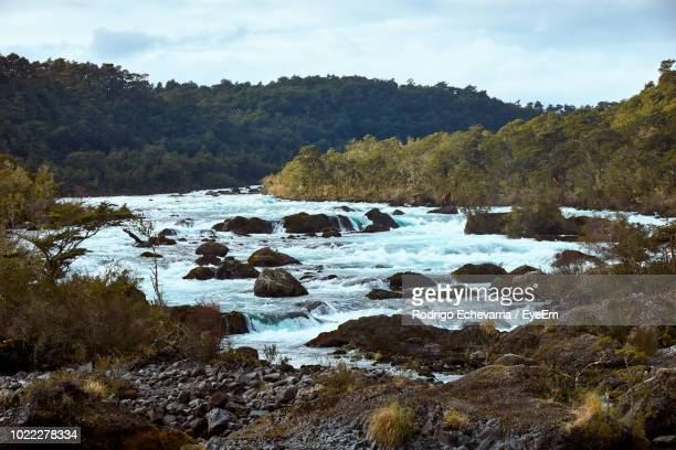scenic view of river amidst trees against sky - petrohue river stock photos and pictures