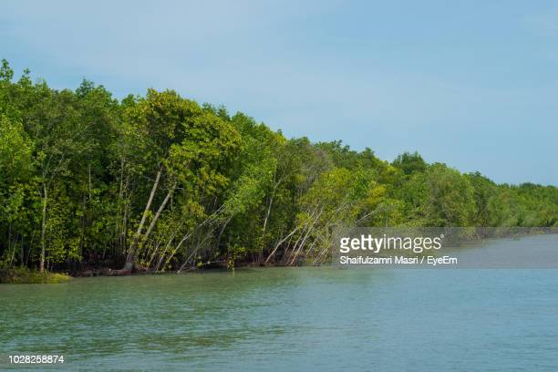 scenic view of river amidst trees against sky - shaifulzamri foto e immagini stock