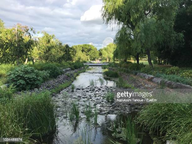 scenic view of river amidst trees against sky - 吹田市 ストックフォトと画像