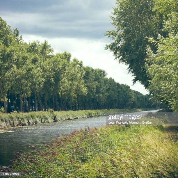 scenic view of river amidst trees against sky - damme stock pictures, royalty-free photos & images