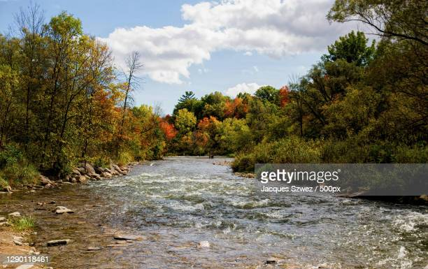 scenic view of river amidst trees against sky,mississauga,ontario,canada - mississauga stock pictures, royalty-free photos & images