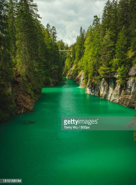 scenic view of river amidst trees in forest against sky,schweiz,switzerland - baum stock pictures, royalty-free photos & images