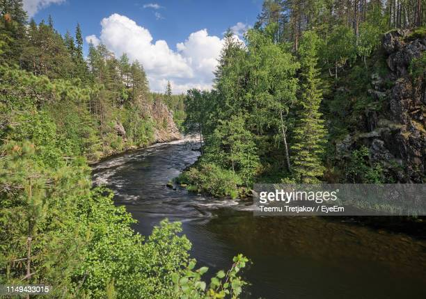 scenic view of river amidst trees in forest against sky - teemu tretjakov stock pictures, royalty-free photos & images