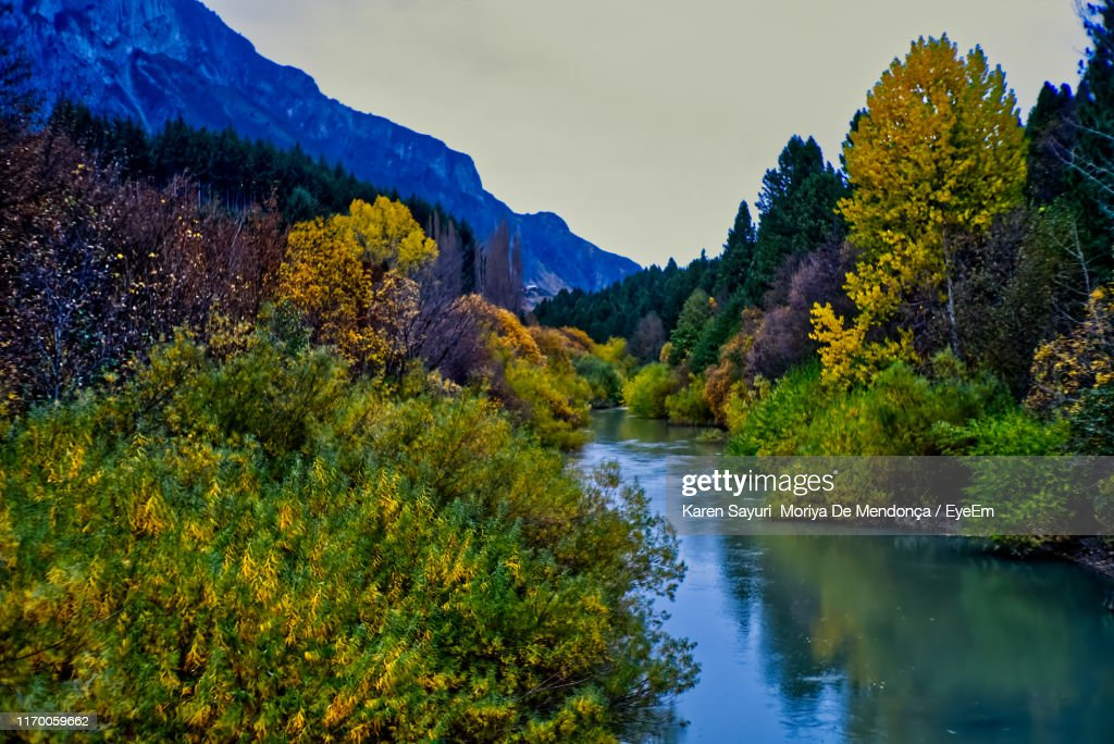 Scenic View Of River Amidst Trees In Forest Against Sky : Stock Photo