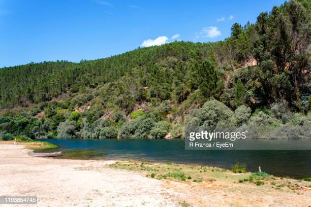 scenic view of river amidst trees in forest against sky - 川岸 ストックフォトと画像