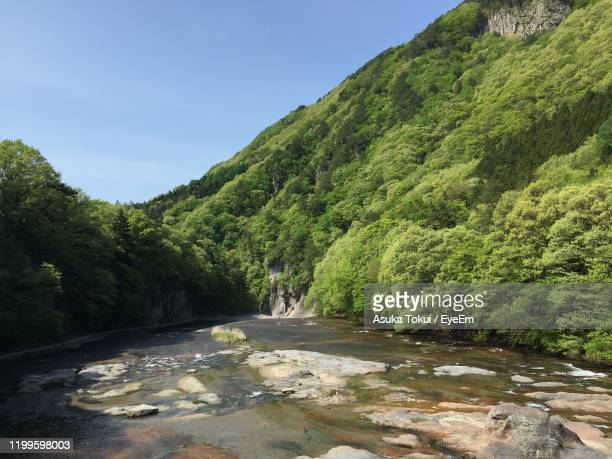 scenic view of river amidst trees in forest against sky - asuka stock pictures, royalty-free photos & images