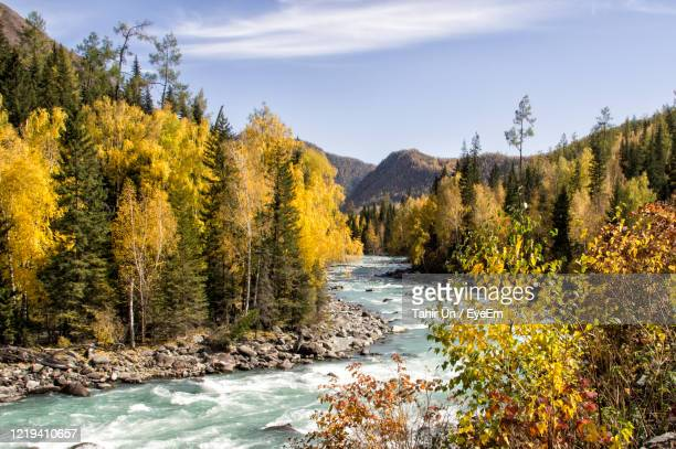 scenic view of river amidst trees in forest against sky - altay xinjiang province china stock pictures, royalty-free photos & images