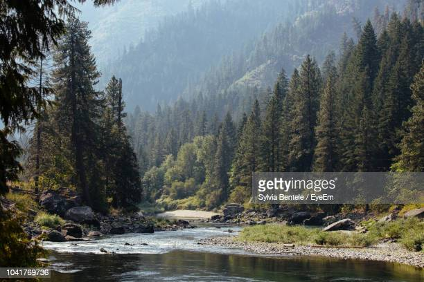 scenic view of river amidst trees in forest - north america stock pictures, royalty-free photos & images