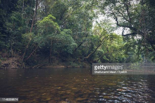 scenic view of river amidst trees in forest - shaifulzamri 個照片及圖片檔