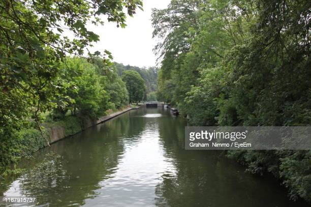 scenic view of river amidst trees in forest - jade nimmo - fotografias e filmes do acervo