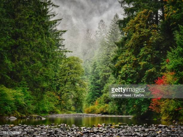 scenic view of river amidst trees in forest - jennifer reed stock pictures, royalty-free photos & images