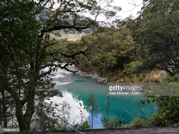 scenic view of river amidst trees in forest - brosnan stock photos and pictures