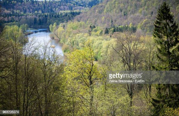 scenic view of river amidst trees in forest - brezinska stock pictures, royalty-free photos & images