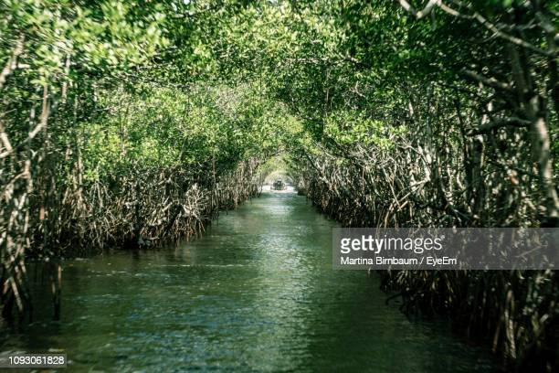 scenic view of river amidst trees - everglades national park stock pictures, royalty-free photos & images