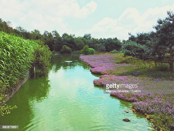 Scenic View Of River And Purple Flower Bed Against Sky