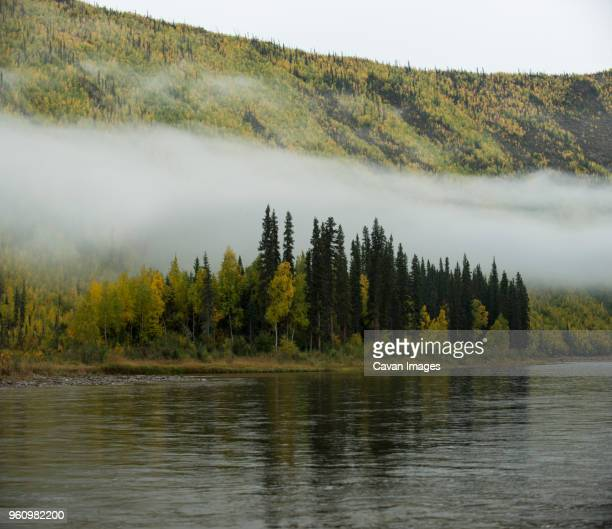 scenic view of river at yukon_charley rivers national preserve during foggy weather - charley green stock pictures, royalty-free photos & images