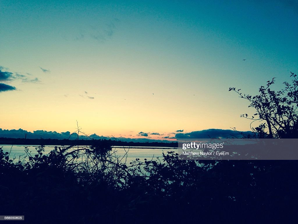 Scenic View Of River By Silhouette Plants : Stock Photo