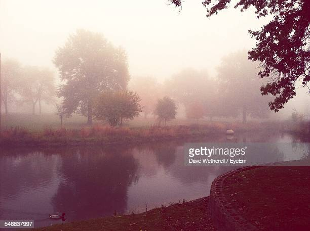 scenic view of river by trees during foggy weather - シダーラピッズ ストックフォトと画像