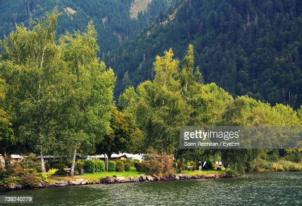 Scenic View Of River By Trees