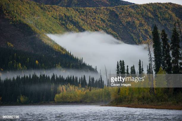 scenic view of river by trees yukon_charley rivers national preserve during foggy weather - charley green stock pictures, royalty-free photos & images