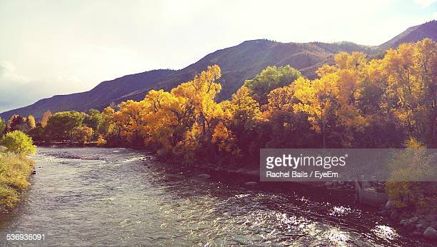 Scenic View Of River Flowing In Forest Against Clear Sky During Autumn