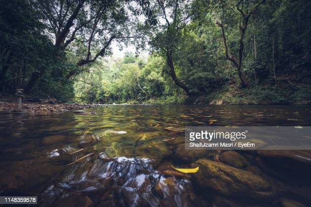 scenic view of river flowing in forest - shaifulzamri 個照片及圖片檔