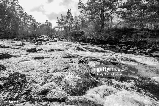 scenic view of river flowing through forest - アバフェルディ ストックフォトと画像