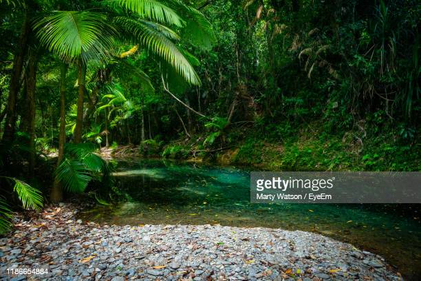 scenic view of river flowing through forest - beauty in nature stock pictures, royalty-free photos & images