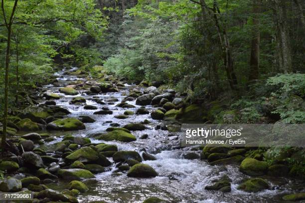 scenic view of river flowing through rocks - hannah brooks stock pictures, royalty-free photos & images