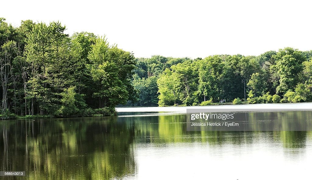 Scenic View Of River In Forest Against Clear Sky : Stock Photo