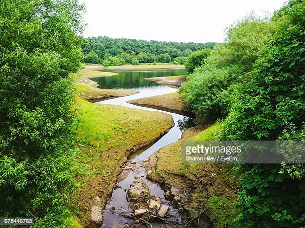 Scenic View Of River In Forest Against Clear Sky