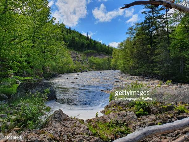 scenic view of river in forest against sky - mcgregor stock pictures, royalty-free photos & images
