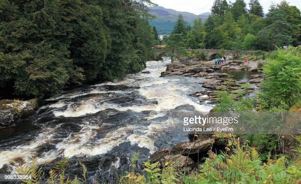 scenic view of river in forest against sky - アバフェルディ ストックフォトと画像