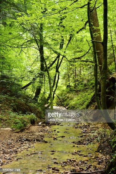 scenic view of river in forest - フォアアールベルク州 ストックフォトと画像