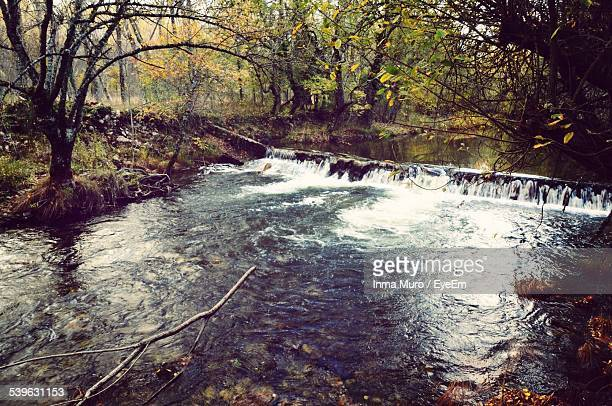 scenic view of river in forest - muro stock photos and pictures