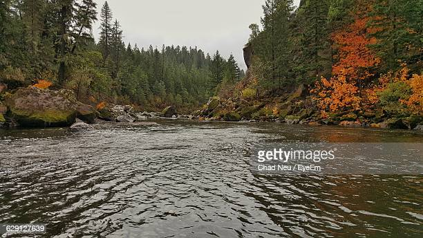 scenic view of river in forest - neu stock pictures, royalty-free photos & images